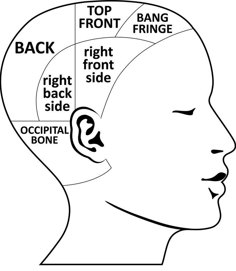 man-head-divisions-scheme-vector-18358680